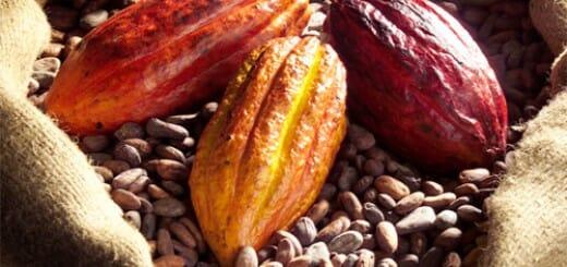 Cote d'Ivoire cocoa production