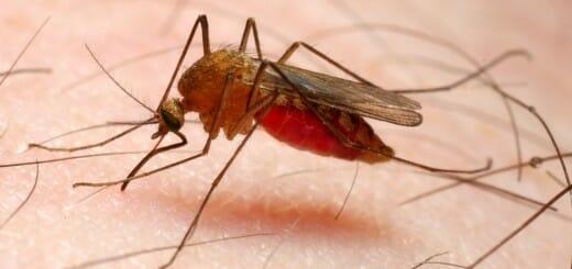 o-MALARIA-facebook